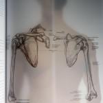 anatomie boek