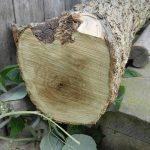 vlierhout